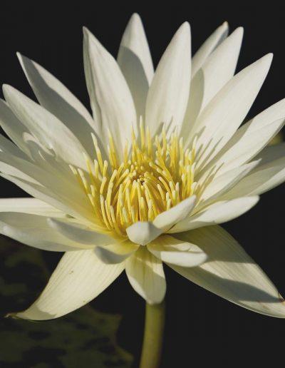 bOTANICAL FLOWER n#1