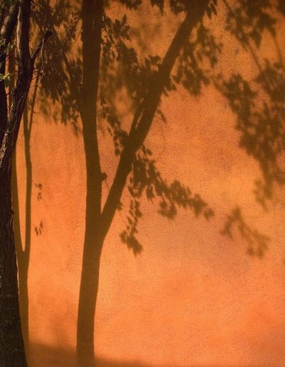 tree shadow albakerque