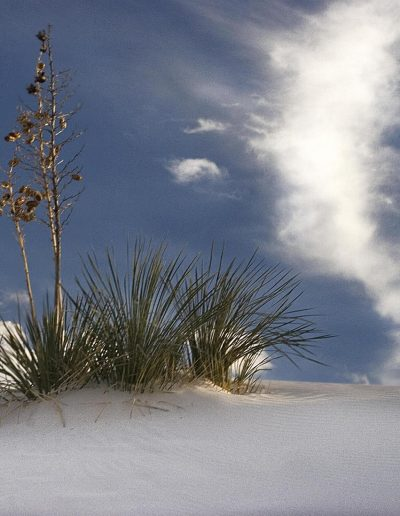 white sand dunes New mexico N#1